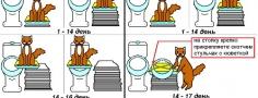 Как приучить котенка к туалету и унитазу