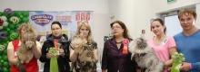 29-30 Марта 2014 г. Кошачьи Ассамблеи
